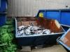 Container - 5m³ Mulde